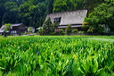 content/stories/Japan/Shirakawa_world_heritage.htm/preview/shirakawa-go_japan_06j0223.jpg